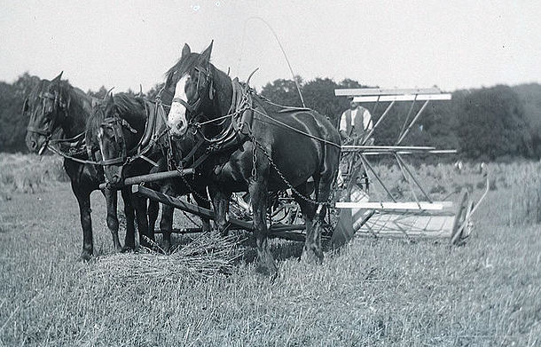 Early 1900s farming scene showing a horse drawn reaper. Author 'Whatsthatpicture,' Hanwell, London. © Creative Commons Attribution 2.0 Generic license.