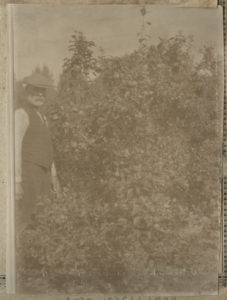 John beside an apple tree from Hilda Currie's photograph album (NRO 10361/1/233).